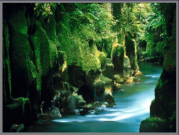 A river flowing through a mossy, fern-rich gorge in the Urewera Forest in New Zealand's North Island.